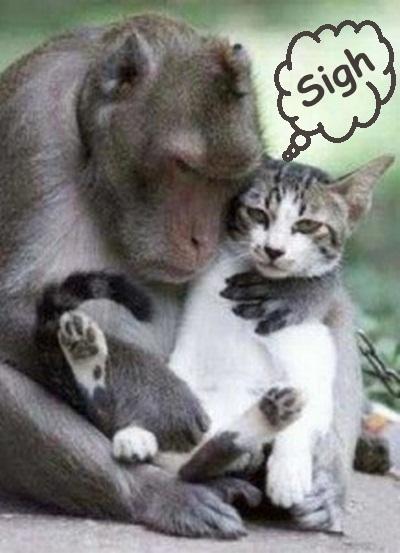 cat-monkey-hugging