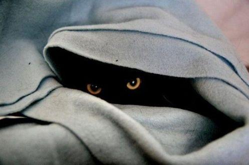 black cat hides under a blanket