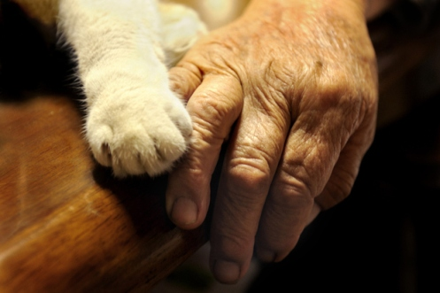 cats paw and grandmothers hand side by side